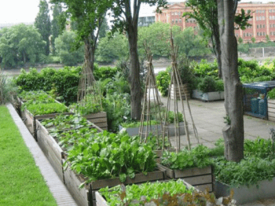 River Cafe - An Organic Garden by Brown Earth Landscapes
